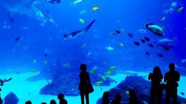 Living in Atlanta: Georgia Aquarium