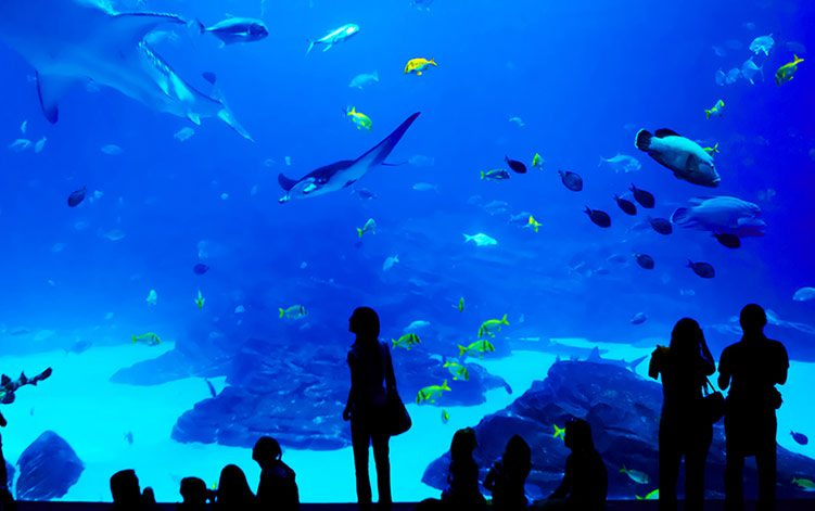 Living in Atlanta: Georgia Aquarium