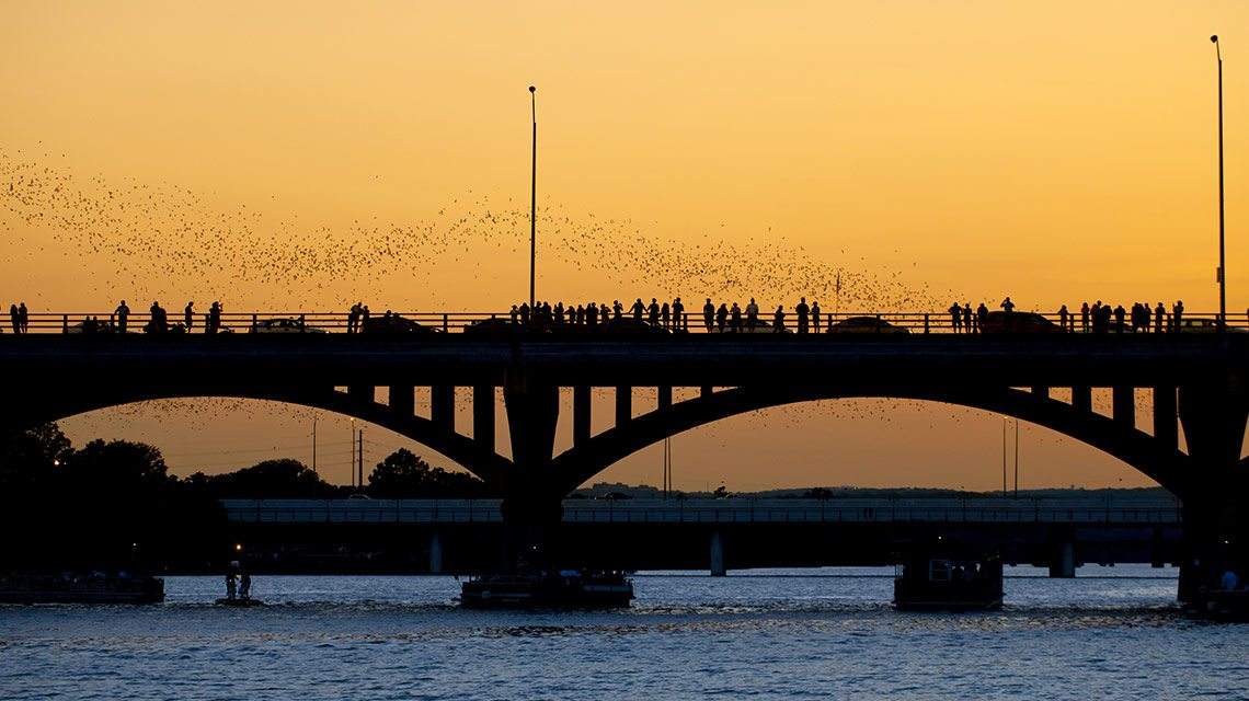 City guide: Moving to Austin TX - Bats and bridge