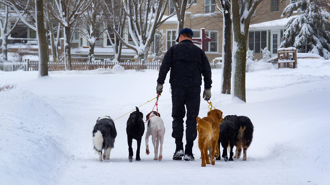 City guide: Moving to Minneapolis- Dogs walking in snow